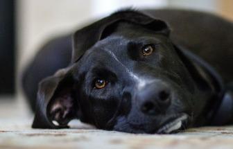 dog-448988_1920